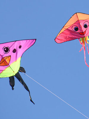 Brookings Kite Festival